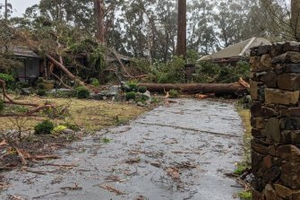 Damage in the Dandenong Ranges.