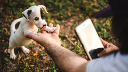How to take better photos of your pets (yes, pets)