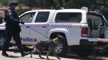 The dog squad tracked the teenagers to nearby Warnambul Road. (File image)