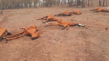 The bodies of dead horses on the property this week.