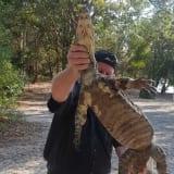 Child bitten by 'very nasty' goanna at SEQ campground