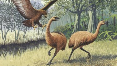 An artist's impression of moa.
