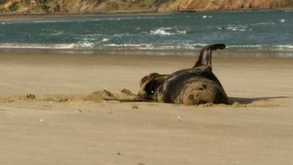 Did a seal eat your holiday pics? A New Zealand scientist wants to know