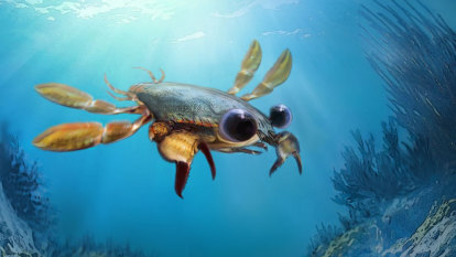 'Beautiful nightmare' crab with cartoonish eyes discovered