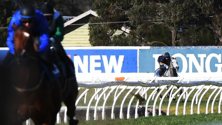 Long way back: Chautauqua chases the field at Rosehill on Tuesday.