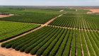 Macquarie and Roc Partners are fighting to secure fruit orchards leased to Costa Group.