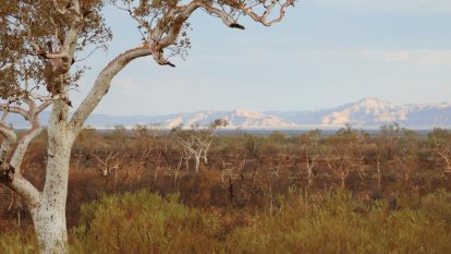 High Court rejects FMG's native title appeal over Pilbara land