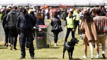 A police dog at the entry of Ballarat's Spilt Milk Festival on Saturday
