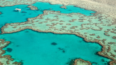 Federal Environment Minister Sussan Ley has revoked the export licence of the Great Barrier Reef commercial fin fishery.
