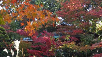 Shun Tokyo's designer shops for the beauty of the Nezu garden.