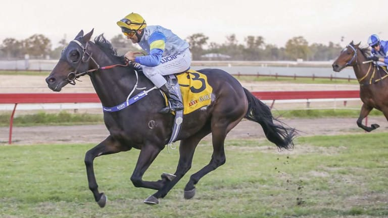 The right stuff: Ricky Blewitt  and Track Flash take out  the Moree Picnic Cup.
