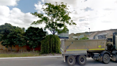 Robinia trees, a mulberry and a melia tree are among those to be removed.