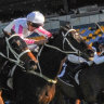 Kiss off: Sam Clipperton (white cap) punches Destiny's Kiss  through the middle to win the Winter Cup.