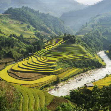 Rice grows at Ha Giang in northern Vietnam. At one point, the Prime Minister called his Vietnamese counterpart to shore up a supply of rice for Australia.