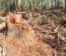 'Growing a backbone': NSW EPA praised for prosecuting Forestry Corp