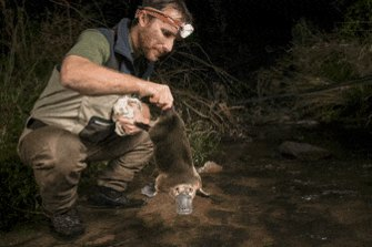 Bushfires toll on platypuses prompts protection alarm call