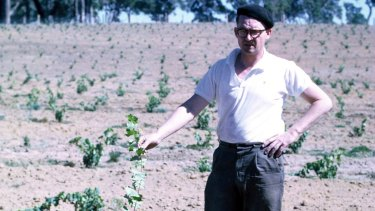 Tom Cullity, aged 43, with the first Vasse Felix vines he planted in the late 1960s.