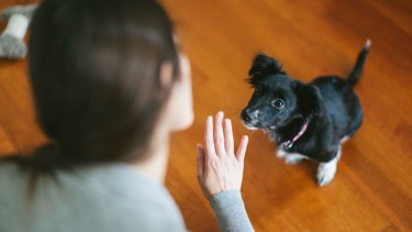 Dogs and humans are encouraged to communicate using signals and body language.