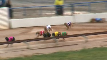 Moroccan Miss (in blue) was euthanised after being badly injured in this race.