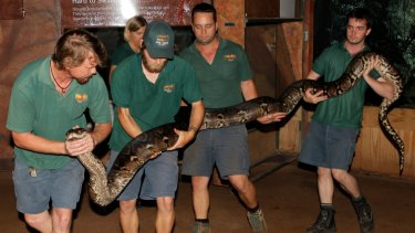 Perth Zoo has bid farewell to its scaly resident Cuddles the reticulated python, who died on Wednesday morning. He was estimated to be between 25 and 35 years old.