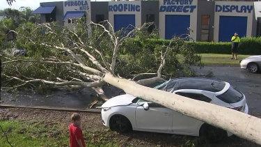 A fallen tree on the Gold Coast on Monday.
