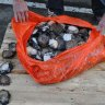 WA men fined more than $90,000 for plan to sell illegally caught abalone haul