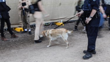 A police sniffer dog checks punters at Splendour in the Grass this year.