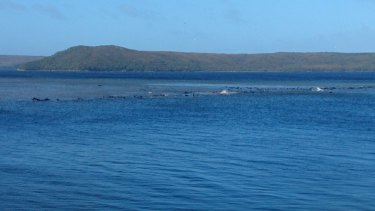 About 70 whales are stuck on a standbar in Tasmania.