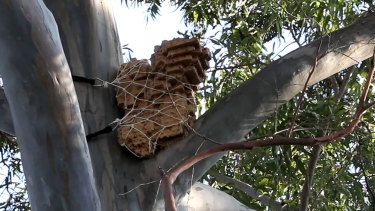 It is hoped the trial nest boxes could house powerful owls around Sydney.
