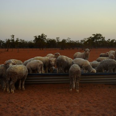 Drought has taken a toll on Australian farmers but could also cost The Nationals at the federal election.