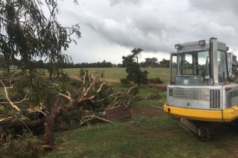Trees were uprooted at Meadow Flat.