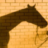 Horse trainer outed for lack of vet care