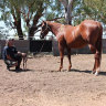 'I'm here today to face you': Backpacker confronts predatory horse breeder