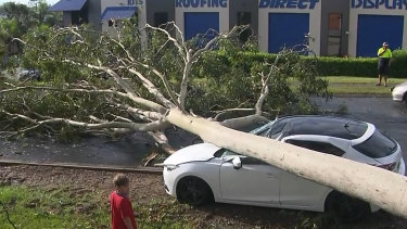 A fallen tree on the Gold Coast on Monday.