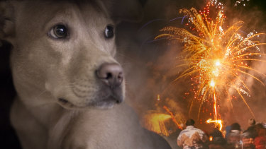 Pet owners are urged to observe their pets tonight.
