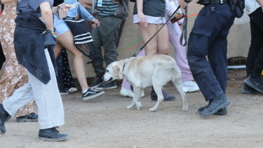 A police sniffer dog checks revellers at Splendour in the Grass near Byron Bay this year.