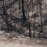 Fires ravaged not only plants and animals, but the soils beneath them
