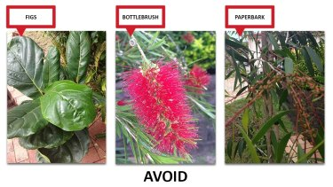The top three plants responsible for creeping into and blocking Brisbane's sewers.