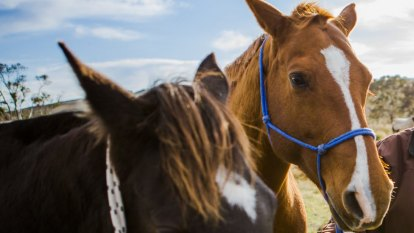Echuca horses snapped up, after unprecedented support