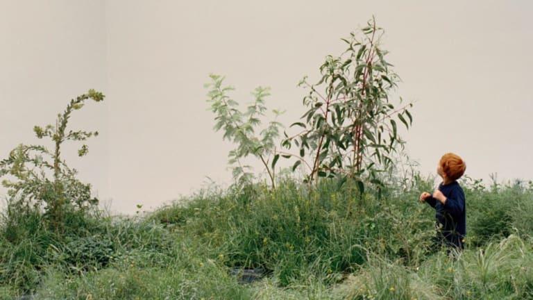 A sapling in the grass.