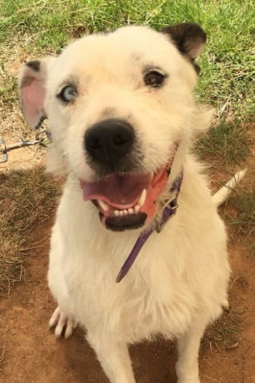 Josie is also up for adoption.