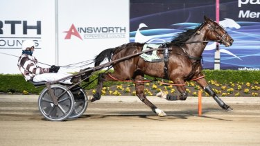 The 3yo Breeders Challenge Blue winner Im Bruce Almighty, trained and driven by David Hewitt, is expected to be a contender for Harness Racing NSW's new million-dollar series.