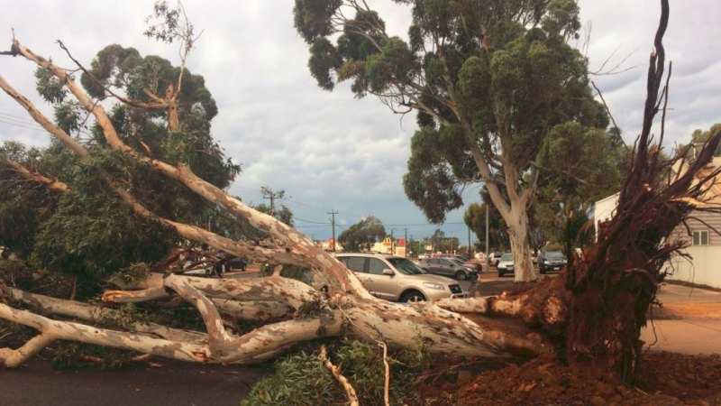 Trees were felled in Kalgoorlie by the storm.