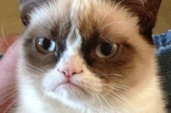 A cat named Tardar Sauce, but known to the internet as Grumpy Cat, became famous for her signature frown, though her owners swore she was actually a sweet girl.