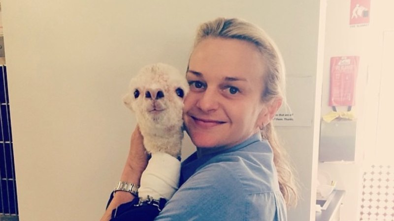 Queensland vet pinned up against wall after showing owner the bill