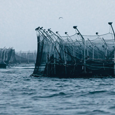 Tassal fish pens in the D'Entrecasteaux Channel. The farming of Atlantic salmon in Tasmanian waters, once  a niche business, has grown into a full-scale industrial operation.