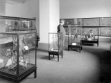 The children's section of the Melbourne Museum in 1917, when it was one of the first museums in the world to have a dedicated children's section.