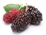 Mulberries can be stubborn.