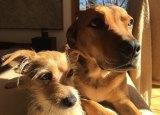 Myrtle and Moey enjoying a spot of sunshine at the Morris Walker office in Fyshwick.