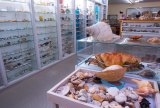 The Bunurong Environment Centre in Inverloch boasts one of the world's best shell collections.